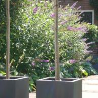 tuinontwerp met boompjes in pot